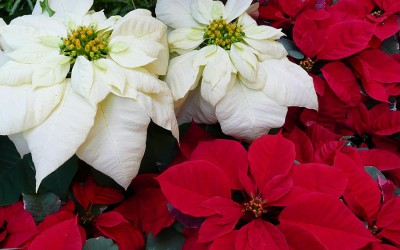 GCS Bands/Choirs Christmas Fundraiser
